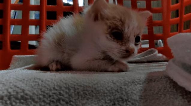 息子がダンボールに入った赤ちゃん猫を拾ってきた。名前はまだ無い。