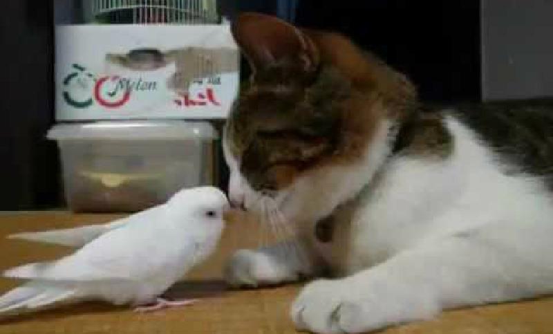 超なかよし!すやすや猫ちゃんと遊んで欲しい小鳥のツンツン攻撃♪