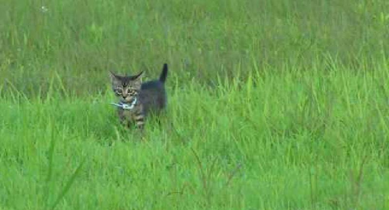 青い草原に子猫がいる風景。優しい犬に見守られながら戻ってくる子猫