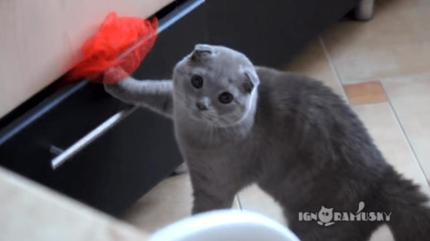 誰も見てないうちに物色しちゃうぞー!。。。あっバレた。 証拠隠滅を図った猫ちゃんの表情 (笑)
