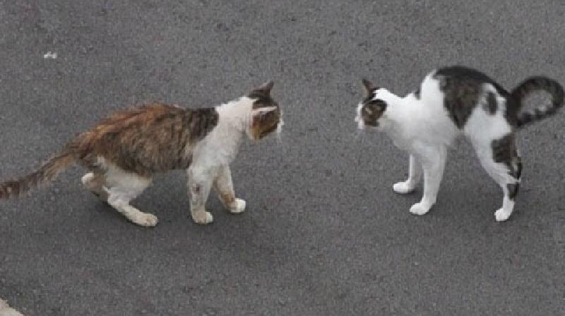 ドキュメント『猫が友達になる瞬間』野良猫の新参者が受け入れられた瞬間!