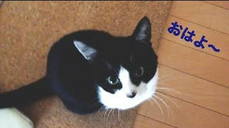 「おはよ~!」人間よりも人間らしく朝の挨拶をする猫ちゃん動画