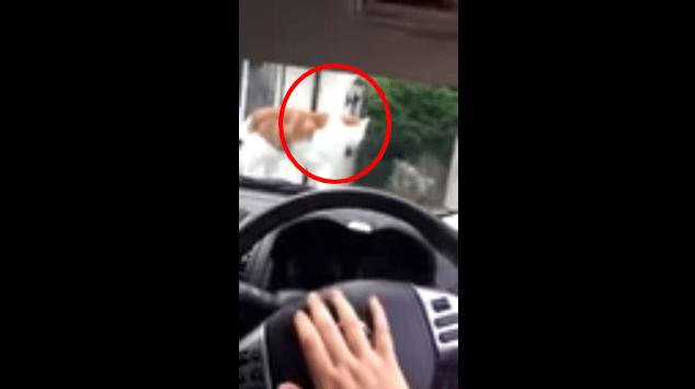 たったの4秒動画でも面白い♪ 猫ちゃんにクラクションを鳴らした結果。
