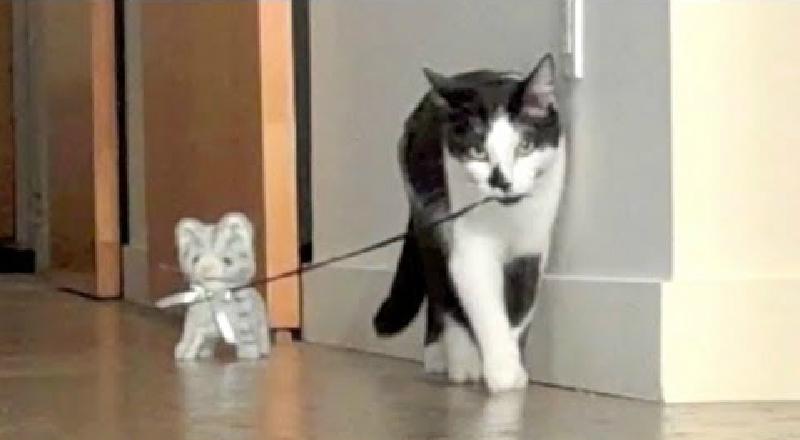 猫ちゃんが…猫ちゃんのお散歩中???