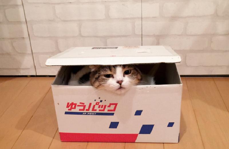 最後は必ずカメラ目線!?大人気猫ちゃんどんぐりちゃん動画まとめ♪