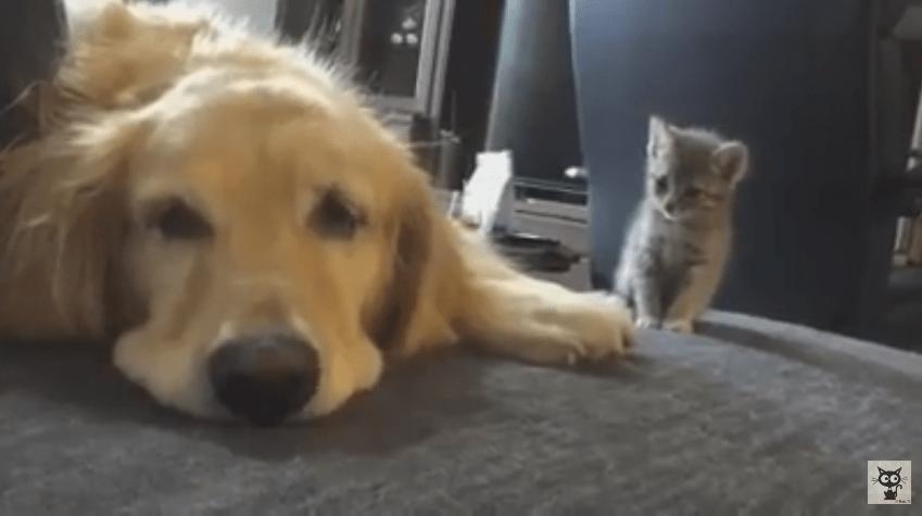 ドキドキしながらワンちゃんに近寄る猫ちゃん。。。そして!!!!癒されるわ〜(´∀`=)