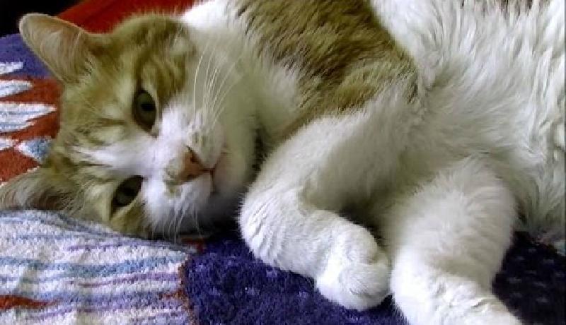 とっても眠たそうなのに話しかけるとちゃんと返事をするかわいい猫