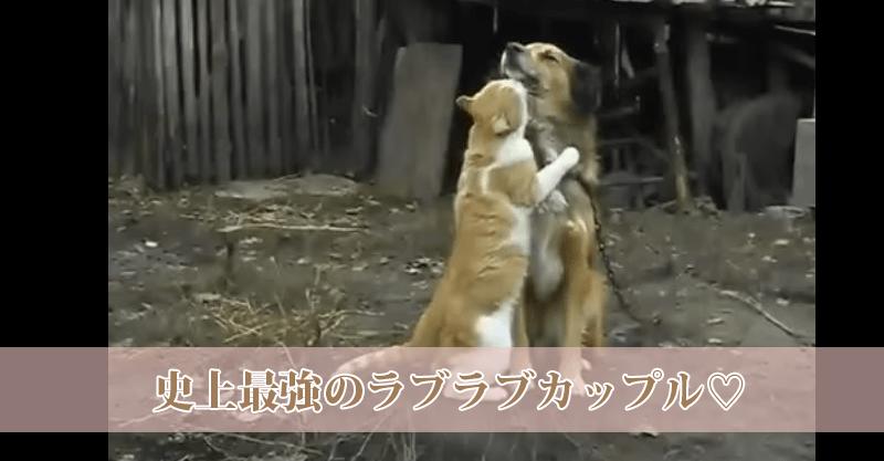 超ラブラブなワンちゃん&猫ちゃん♡ とっても仲良しです(*´ω`)