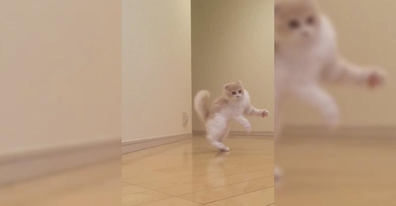 隠し撮りに気付いたネコちゃんが…見たことない歩き方で逃げ出した!!