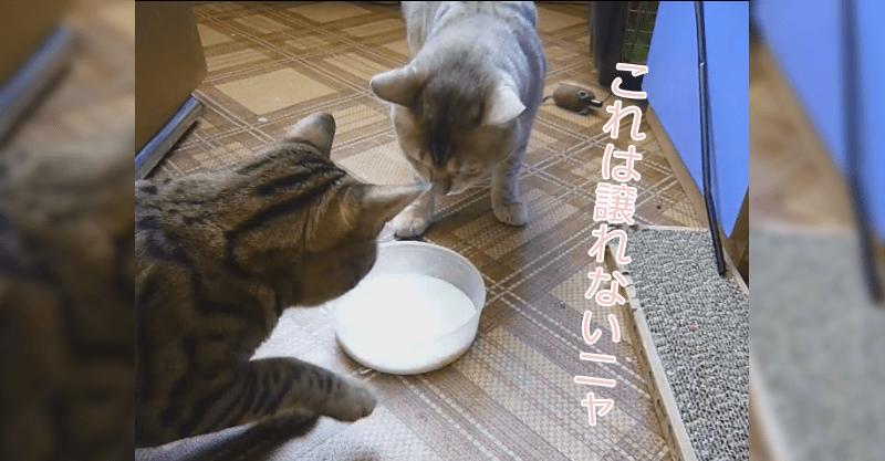 仁義なきシュールな戦い(笑) ミルク争奪戦!!!