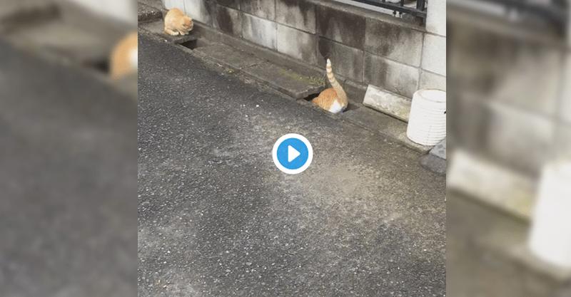 めっちゃ可愛くない?道路の溝でじゃれあう二匹の猫ちゃん動画が10万以上リツイートの嵐