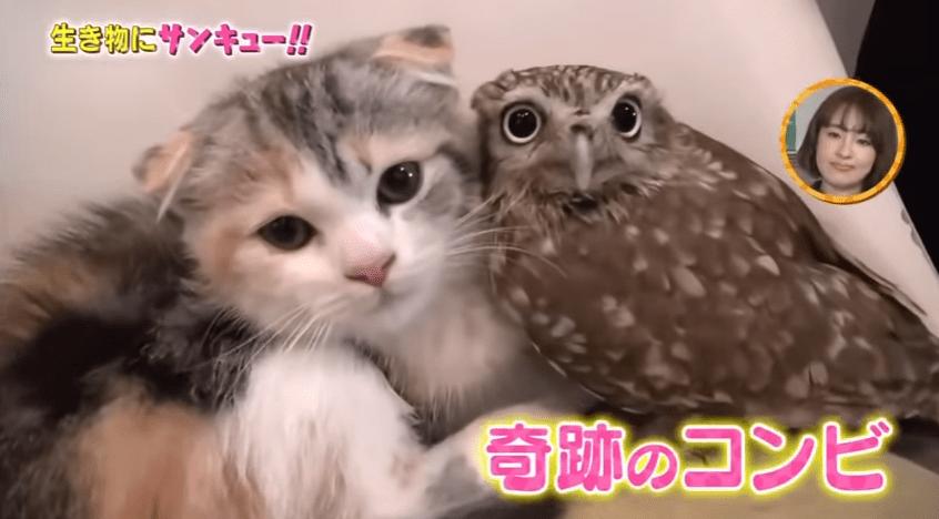 奇跡のコンビ!フクロウと猫ちゃんが仲良しで可愛いです♪