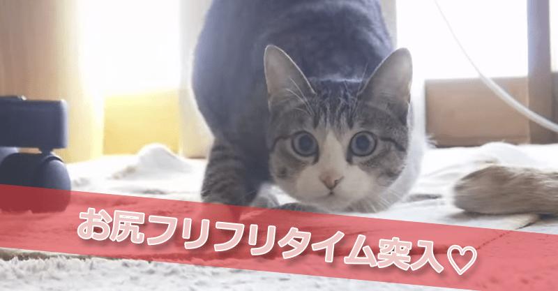 おはぎちゃんのセクシーお尻フリフリタイム♡ 10秒過ぎから大注目です!