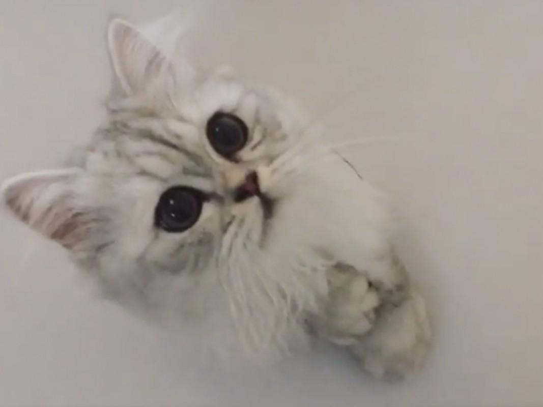 丸い穴から、丸い瞳の猫ちゃんが飛び出します!