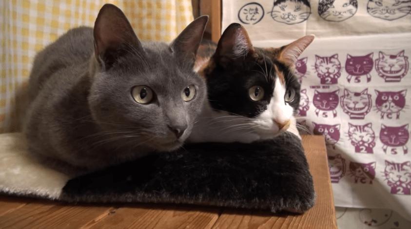 2匹の猫ちゃんが釘付けになりる♪ 凝視している先にあったのは。。。