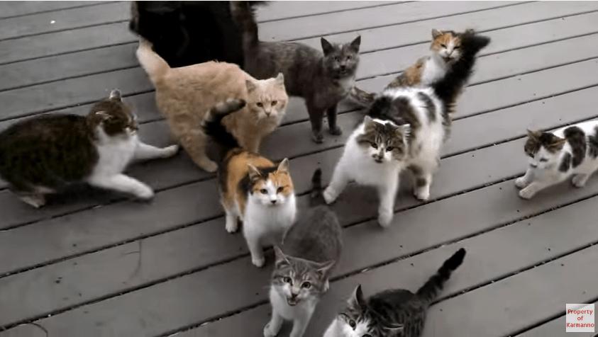 ドアを開けると…「ごーはん♪ ごーはん♪」猫ちゃん達の大合唱!!