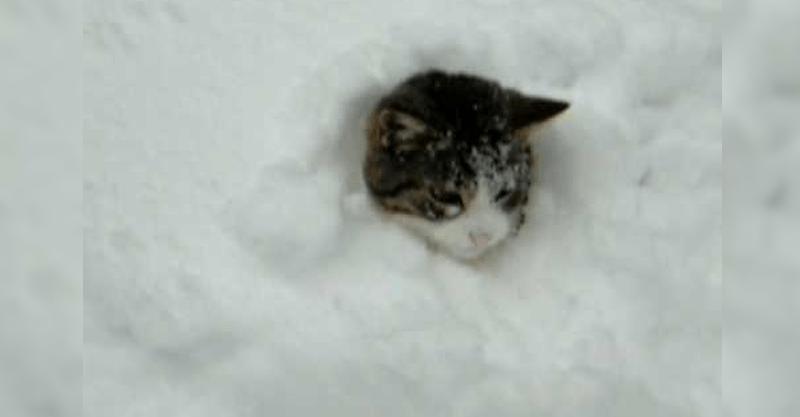 大雪でテンションが上がった猫ちゃんがはしゃぎすぎた結果(笑)