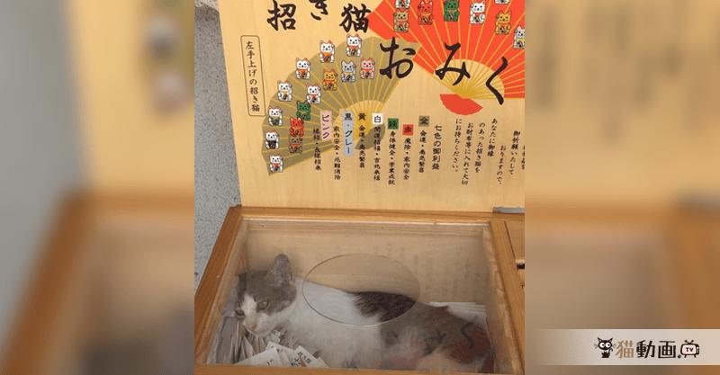 猫寺にて…これが本当の招き猫おみくじ♡ かわいすぎて震える…(〃ω〃)