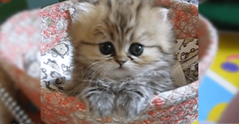 瞳に吸い込まれそうになる…たまらなく可愛い子猫ちゃん