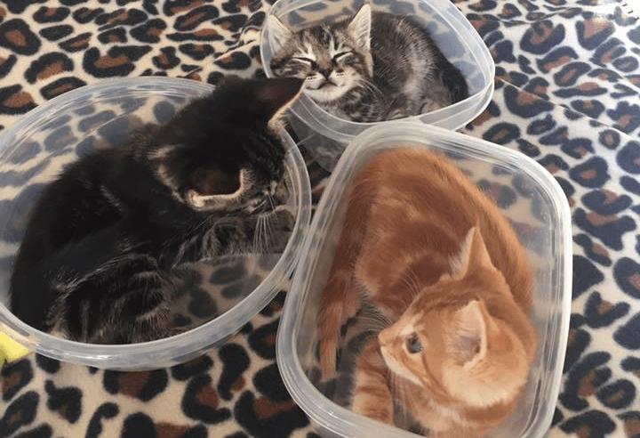可愛さ爆発!それぞれのお気に入りに収まる3匹の猫ちゃん💕
