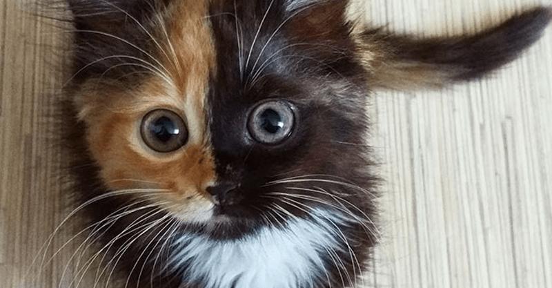 とっても美しい完璧なハーフ顔の猫ちゃんが可愛い!!