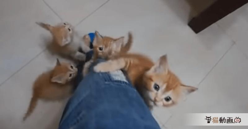 たくさんの子猫に胸キュン!可愛い子猫がよじ登ってきたー(//∀//)