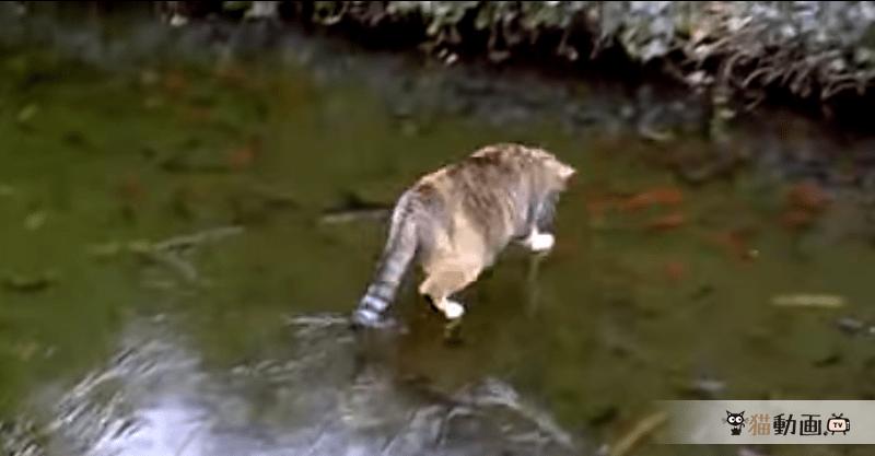 お魚さんを追いかける猫ちゃん、その場所は!?