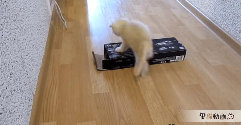 タネも仕掛けもありません! 箱に消える猫( ; ゜Д゜)