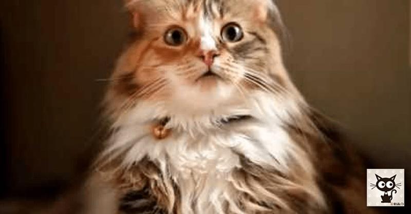 突然の雨音に驚く気品ある猫ちゃんの顔が美しすぎるのです(*≧∀≦*)