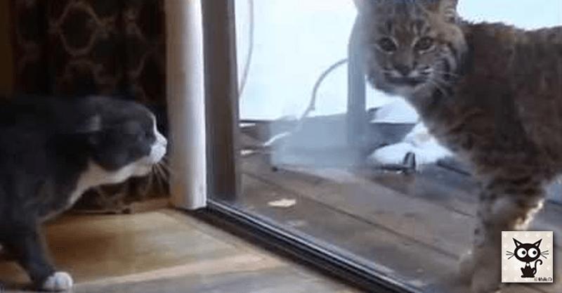 窓の外には大きなネコ!? でも、ちょっと大きすぎです( >Д<;)