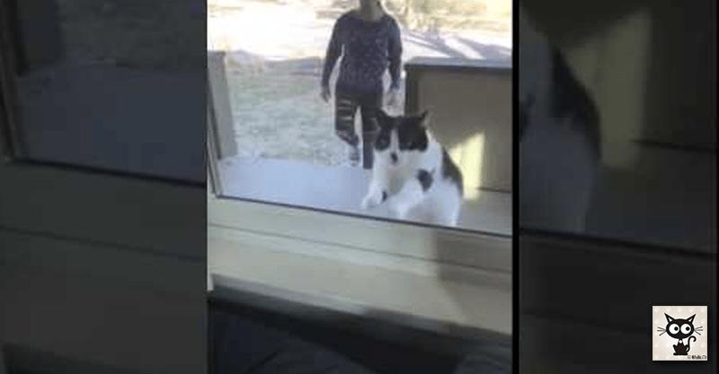 ガラスという見えない敵にぶつかった日。そして猫は大人になった……