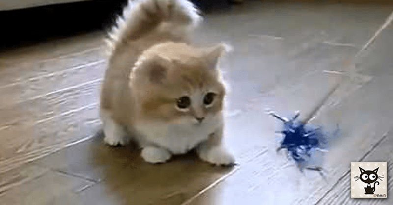 じゃらし甲斐のある子猫ちゃんが可愛いすぎますo(。´>ω<`。)o