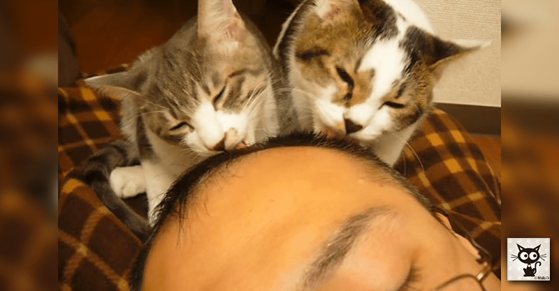 【なめ猫】本当にナメる猫ちゃんたちに困りながら嬉し顔の飼い主さん(≧∀≦)