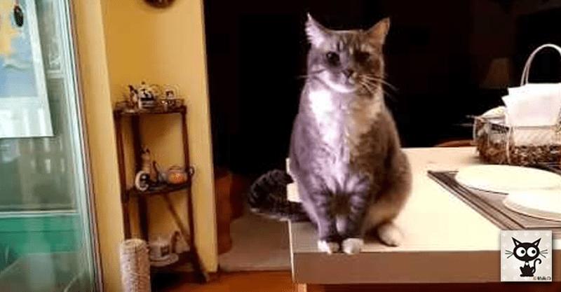 とっても紳士な猫のルイの優雅なお辞儀に背筋がピーン!
