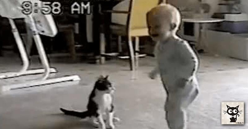 レスリングする猫と赤ちゃんの笑顔がこぼれる格闘の瞬間(*´ェ`*)