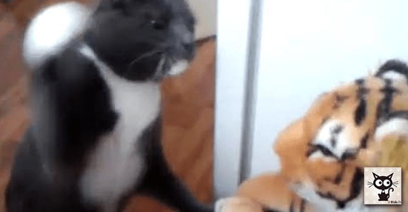 トラのぬいぐるみに本気の猫パンチをする猫ちゃん……いい音出ています。