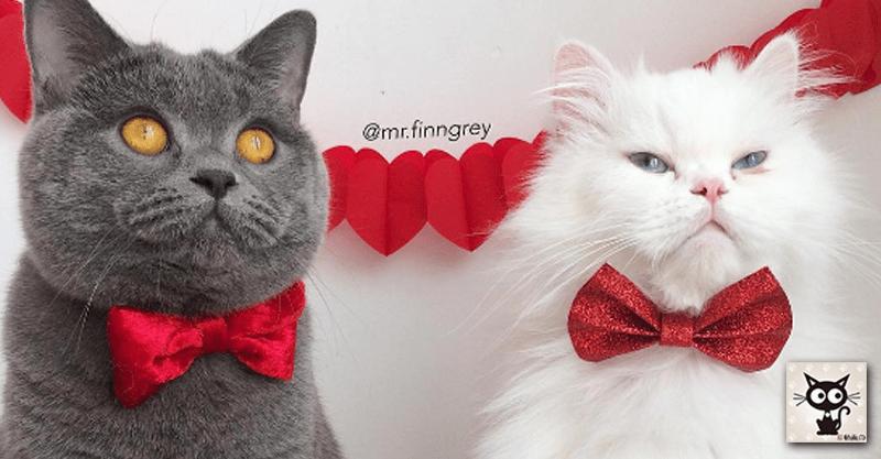 インスタで大人気の猫ちゃんフィン&ロメオ特集です(*´ω`)