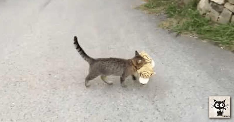 大切なものを運ぶ猫ちゃんの口元には…( ´艸`)