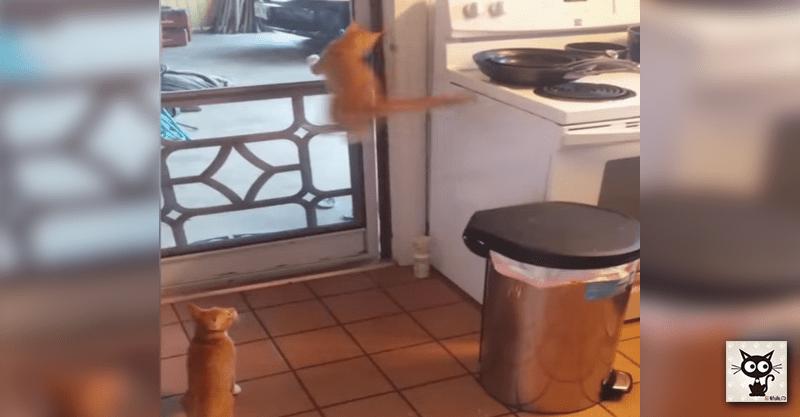猫ちゃんたちの大脱走! 大胆な脱出方法になすすべなし(゚ o゚;)
