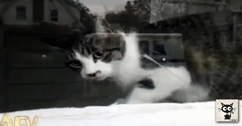 まるでホラーのような猫の郵便受取拒否!(( ;゚Д゚))ブルブル