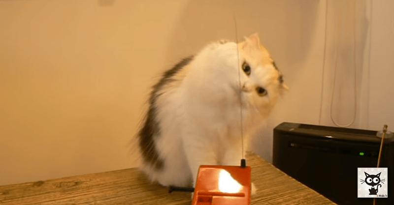 世界初の電子楽器を演奏する世界初の猫演奏者コンサート( ´艸`)