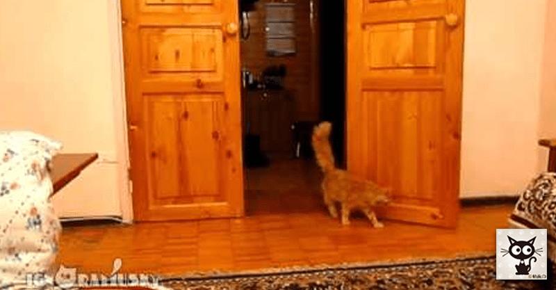 スーパー・マリオ・ブラザーズのジャンプ音でジャンプする猫ヽ(=´▽`=)ノ