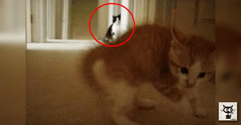 家政婦の猫はミタ!子猫が遊ばれている現場を…(≧∀≦)