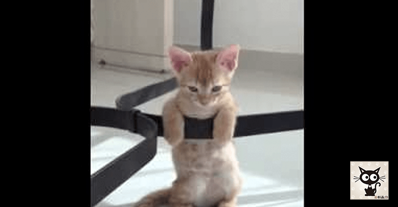 【大きな】ティーカップに入るとっても小さい猫ちゃん!!!Σ(゚□゚(゚□゚*)ナニーッ!!
