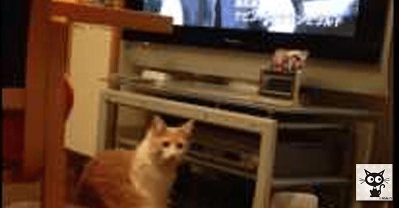 テレビを見ていた猫ちゃんの『コレジャナイ』顔がじわじわきます(*ノ∀`*)