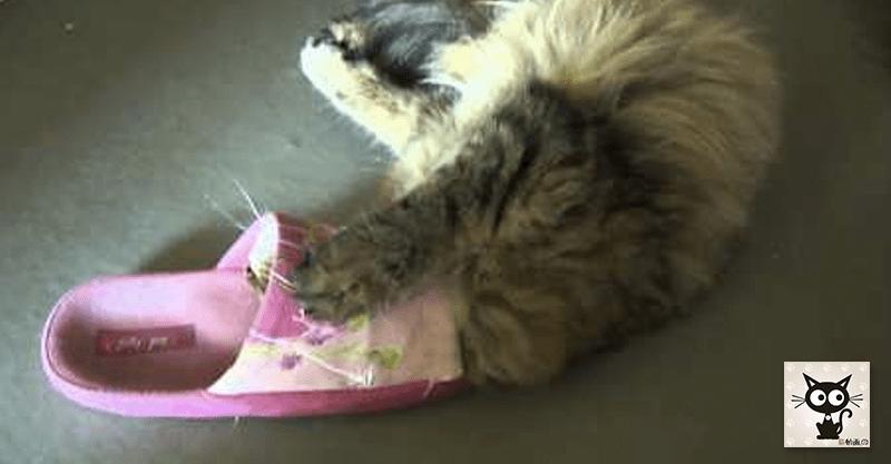 サンダルにじゃれつく猫ちゃんに、ちょっとだけ悲劇が起きました(≧∀≦)