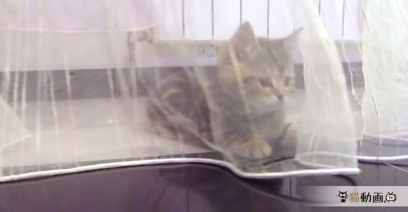 カーテンの裾で遊ぶ猫ちゃんに、なんとなくノスタルジック(=・ω・=)