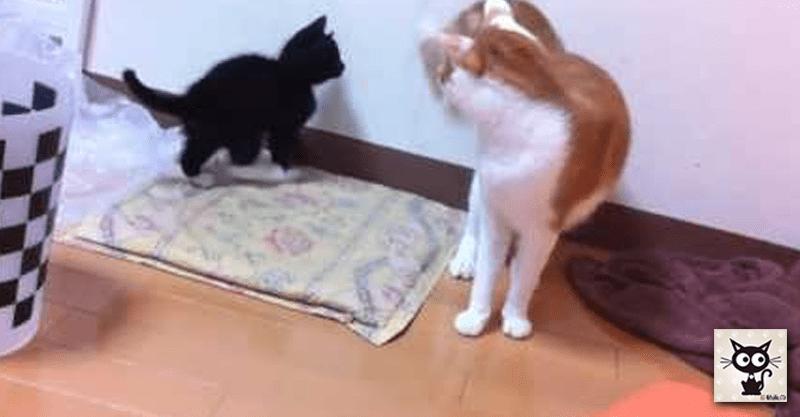 パイセン猫に挑んでいたら、なぜかゴミ箱にすっぽり入ってしまった子猫ちゃん(≧∀≦)