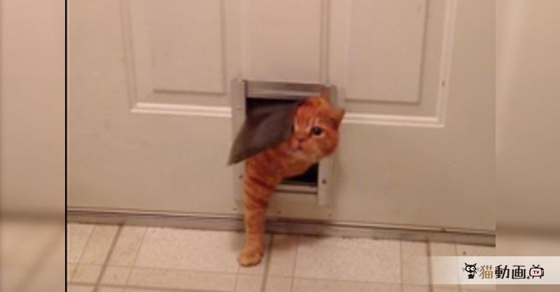 『違うんです、ご主人様が小さいドアをつけてしまったのですにゃ』( ´艸`)