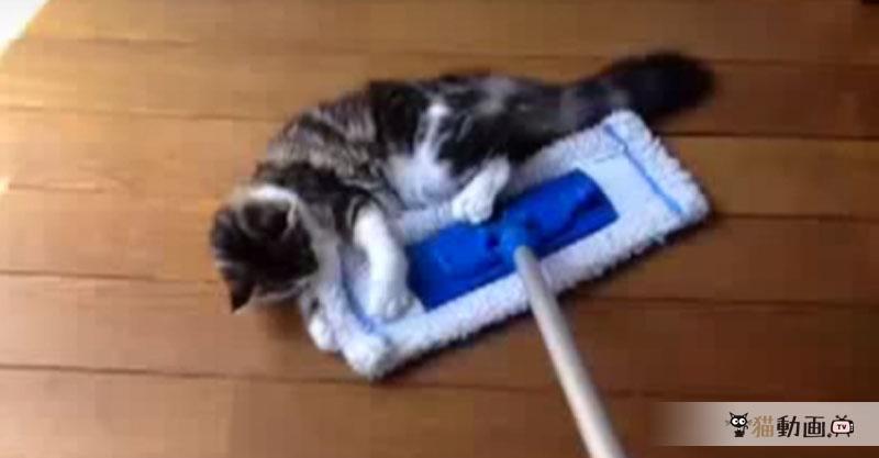 モップでモップ(猫)を釣る! 床も綺麗になる! WIN-WINです(*´ェ`*)